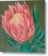 South Africa Protea Metal Print