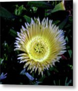 South African Flower 1 Metal Print