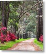 South Carolina Lowcountry Spring Flowers Dirt Road Edisto Island Sc Metal Print
