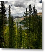South Lake Through The Pines Metal Print
