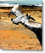 South Padre Pelican Metal Print