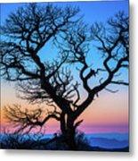 South Rim Tree Metal Print