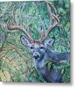 South Texas Deer In Thick Brush Metal Print