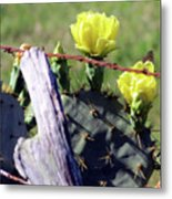 South Texas Fence Metal Print