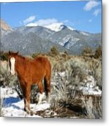 South West Ginger Metal Print
