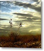 Southeastern New Mexico Metal Print