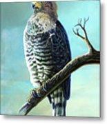 Southern Banded Snake Eagle Metal Print