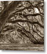 Southern Live Oak Trees Metal Print