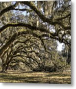 Southern Live Oaks With Spanish Moss Color Metal Print
