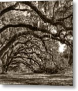 Southern Live Oaks With Spanish Moss Metal Print