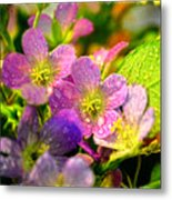 Southern Missouri Wildflowers 1 Metal Print