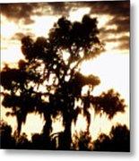 Southern Pine Metal Print