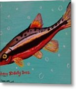 Southern Redbelly Dace Metal Print