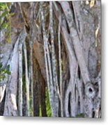 Southern Roots Metal Print