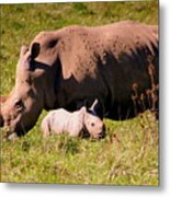 Southern White Rhino With A Little One Metal Print