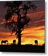 Southwestern Sunrise Color, Silhouetted Oak Tree And Three Horses Metal Print