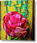 Soutime Rose Against Cracked Wall Metal Print