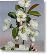 Spade's Apple Blossoms Metal Print
