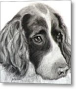 Spaniel Drawing Metal Print