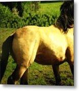 Spanish Horse Dancing Metal Print