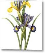 Spanish Iris Metal Print