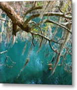 Spanish Moss And Emerald Green Water Metal Print
