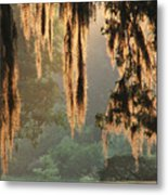 Spanish Moss In The Morning Metal Print