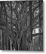 Spanish Moss Of The Tree Metal Print
