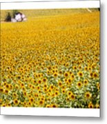 Spanish Sunflowers Metal Print