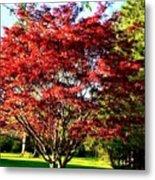 Sparkling Japaneese Maple Tree Metal Print