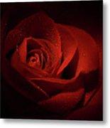 Sparkling Red Rose Metal Print