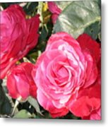 Sparkling Roses Metal Print by Carol Groenen