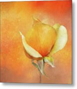 Sparkly Peach Rose Metal Print