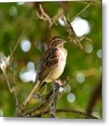 Sparrow-1 Metal Print