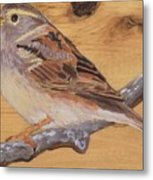 Sparrow 2 Metal Print