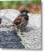 Sparrow Bath Time 9242 Metal Print