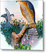 Sparrow Hawk Antique Bird Print Joseph Wolf Birds Of Great Britain  Metal Print