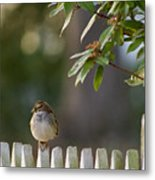 Sparrow In Colonial Williamsburg Metal Print