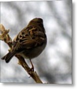 Sparrow In Springtime Metal Print
