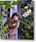 Sparrow In The Shrubs Metal Print