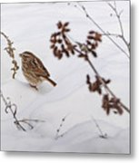 Sparrow In The Winter Snow Metal Print