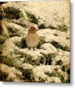 Sparrow In Winter II - Textured Metal Print