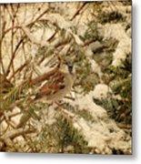 Sparrow In Winter Iv - Textured Metal Print