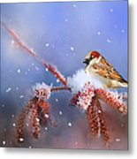 Sparrow In Winter Metal Print