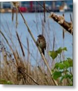 Sparrow On The Cattails Metal Print