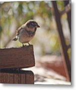 Sparrow. Metal Print