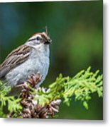 Sparrow With Lunch Metal Print