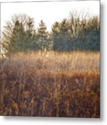 Sparrows Carry Her Name Metal Print