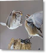Sparrows Fight Metal Print