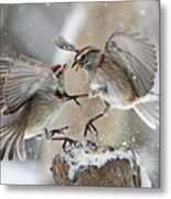 Sparrows Metal Print